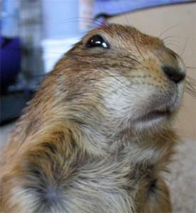 skepticalsquirrel